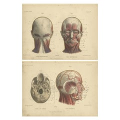 Set of Two Antique Prints of the Human Head by Kuhff, 1879