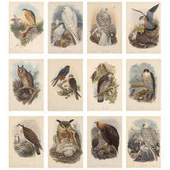 Set Twelve Cream Mounted Exotic Bird Pictures Prints after John Gould, 1804-1881