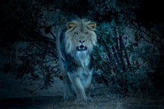 """""""From the Bush"""" 50x60 - Lion Photography, Photograph, Fine Art, Africa"""