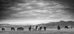 """Gangs All Here"""" - 30x20 Wild Horses -  Mustangs Black and White Photography"""