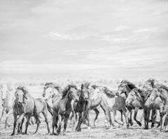 """Go West""  36x48 - B&W Photography of Wild Horses - Photograph by Shane Russeck"