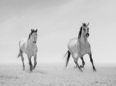 """Heroes of the West "" 36x48 - Black & White Photography, Wild Horses, Mustangs"