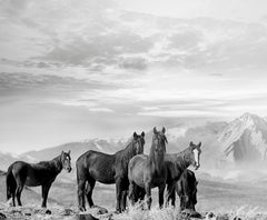 High Sierra Mustangs - 20x30 Black and White Photography of Wild Horses