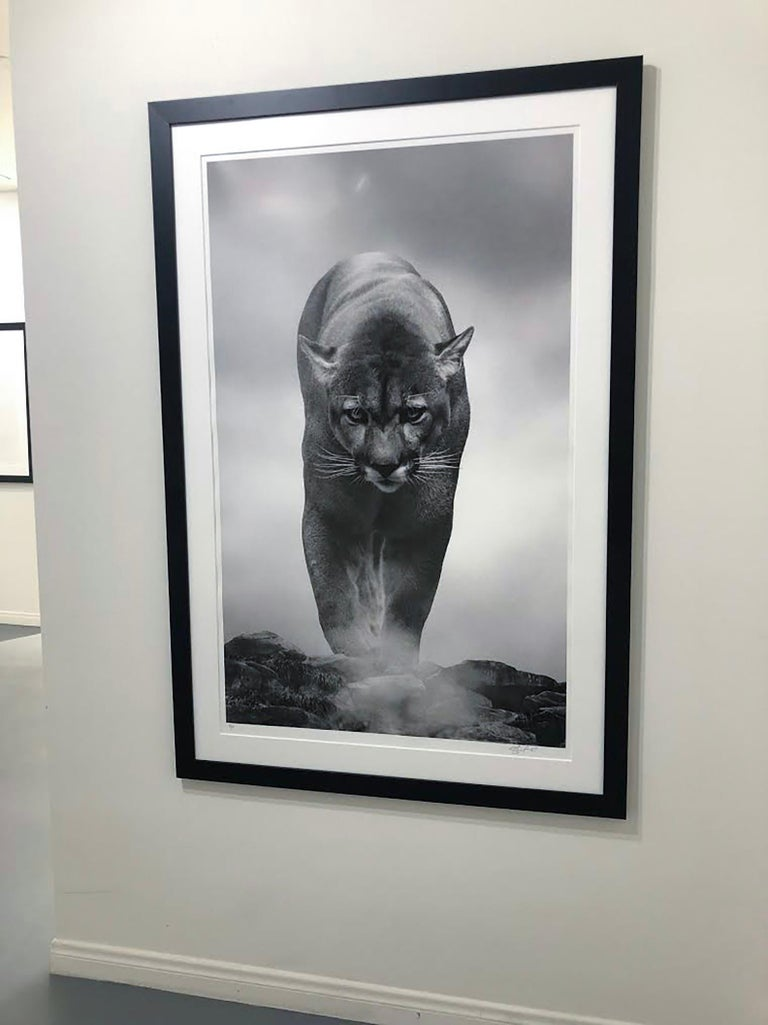 King of the Mountain  36x48 B&W Unsigned Test Print, Cougar, Mountain Lion, Puma - Photograph by Shane Russeck