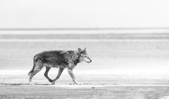 Ocean Wolf 60x30 - Contemporary Black and White Photography, Photograph Wolves