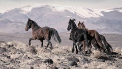 """""""On the Go"""" 40x55 Wild Horses, Mustangs Unsigned test print"""