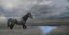 Once Upon a Time in the West - 40x 80  Photography of Wild Horse - Mustang