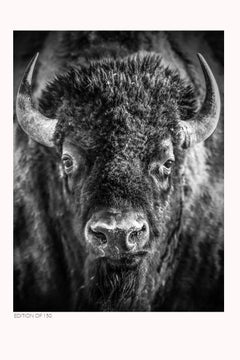 Shane Russeck Gallery Exhibition Poster- Bison American Buffalo Photography Art