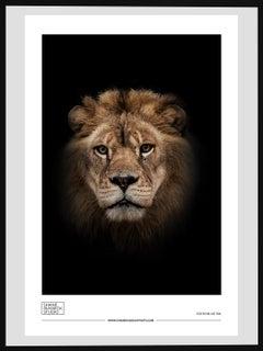 Modern Animal Prints