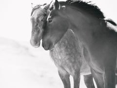 """""""Soulmates""""  40x60 Photography of Wild Horses Mustangs by Unsigned Test Print"""