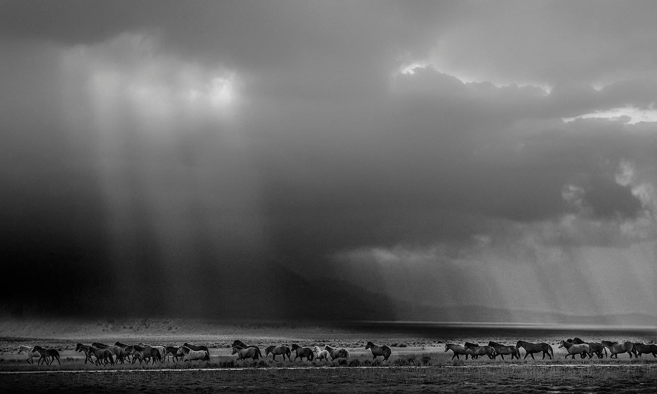 """""""The Unforgiven"""" - Northern California Wild Mustangs, Horse Black and White"""