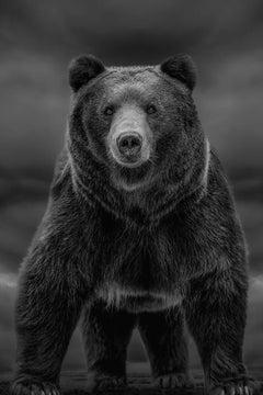 """Times like These""  60x40 - Black & White Photography, Kodiak,  Bear Grizzly"