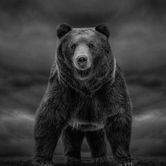 """Times like These""  90x90 - Black & White Photography, Kodiak Bear"