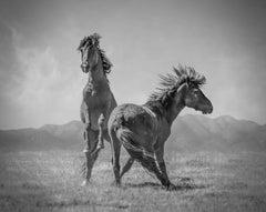 """Wonder Horses"" 20x30 - Black & White Photography, Wild Horses Mustangs Western"