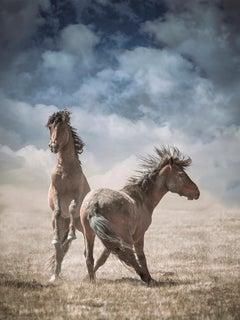 """Wonder Horses""  32 x 40  - Wild Horses - Wild Mustang Photography"
