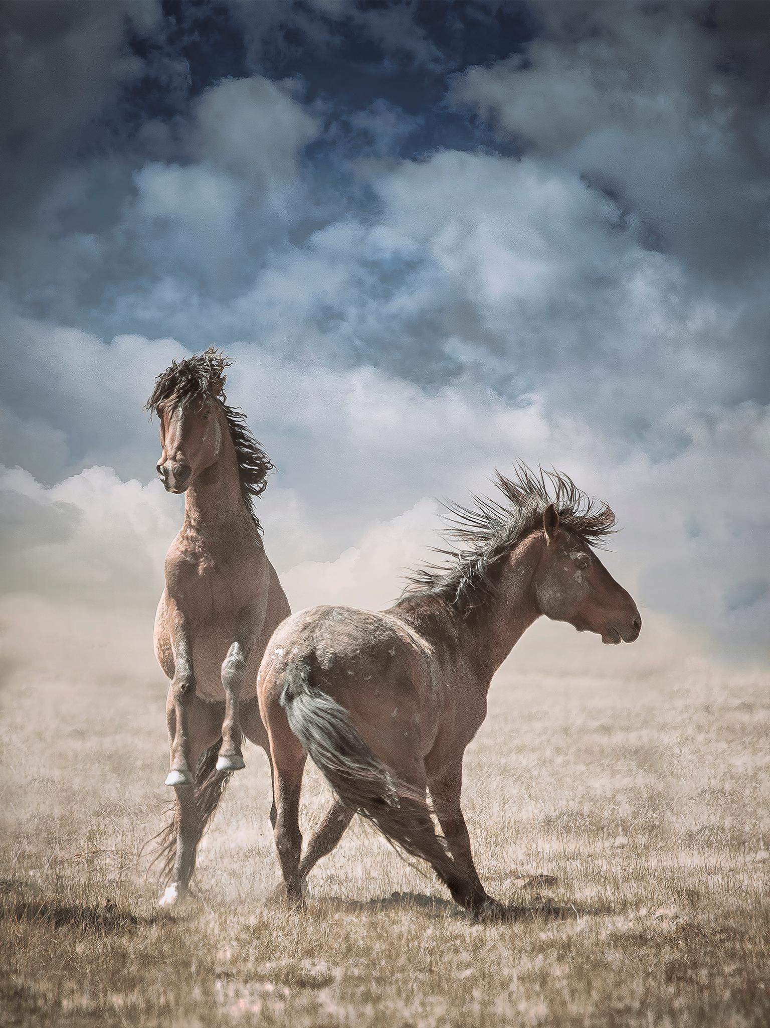 Shane Russeck Wonder Horses 32 X 40 Wild Horses Wild Mustang Photography For Sale At 1stdibs