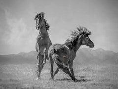 """Wonder Horses"" 36x48 - Black & White Photography, Wild Horses Mustangs Western"