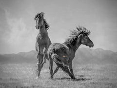 """Wonder Horses"" 40x50 - Black & White Photography, Wild Horses Mustangs Unsinged"
