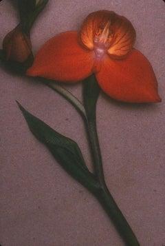 Buddha. Orchid