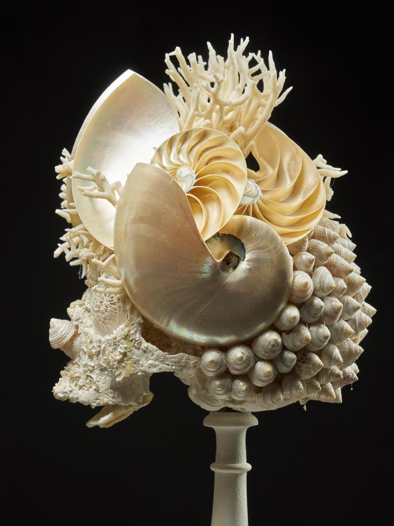 Shell Sculpture of Fantastic Head on Museum Stand For Sale 4