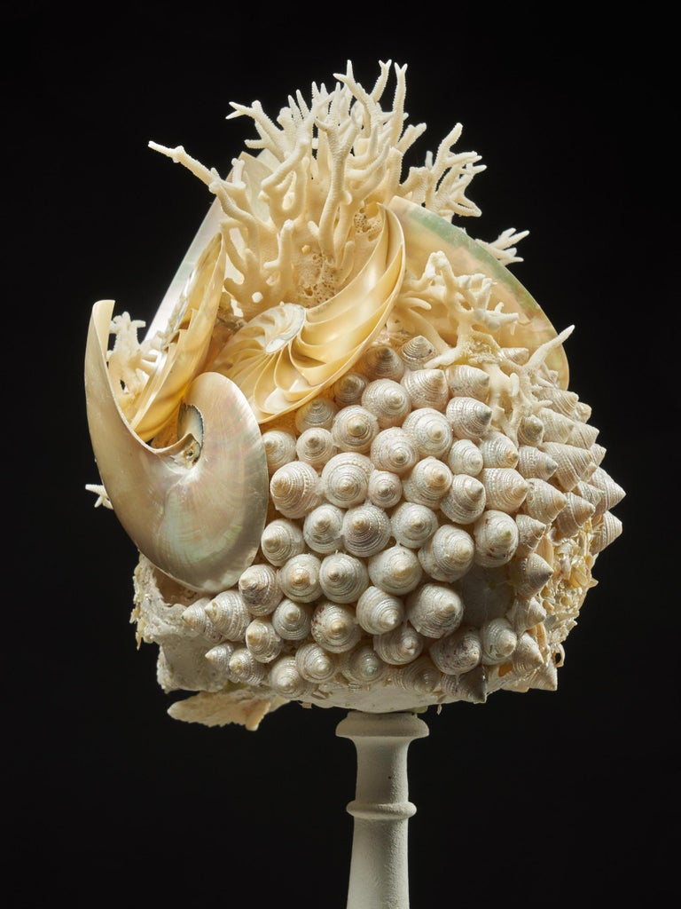 Shell Sculpture of Fantastic Head on Museum Stand For Sale 5