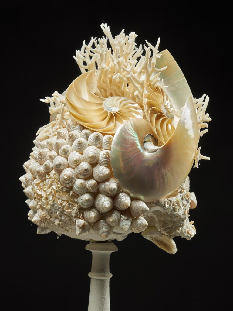 Shell Sculpture of Fantastic Head on Museum Stand For Sale 7