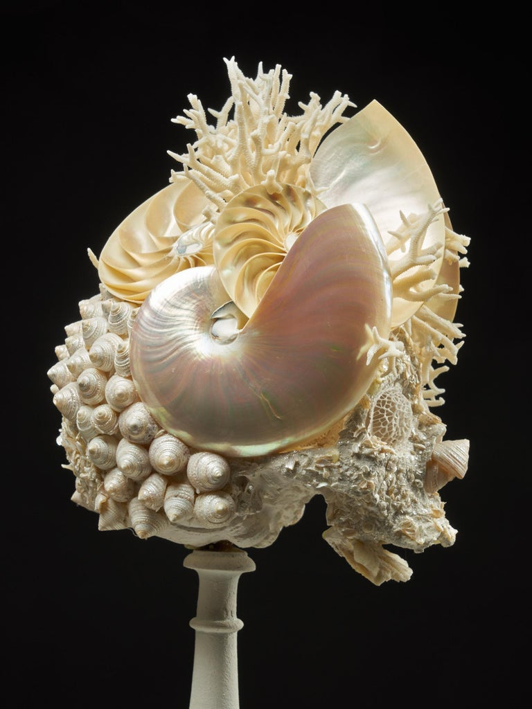 Shell Sculpture of Fantastic Head on Museum Stand For Sale 8