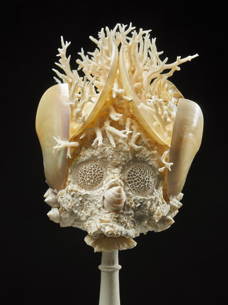 Shell Sculpture of Fantastic Head on Museum Stand For Sale 10