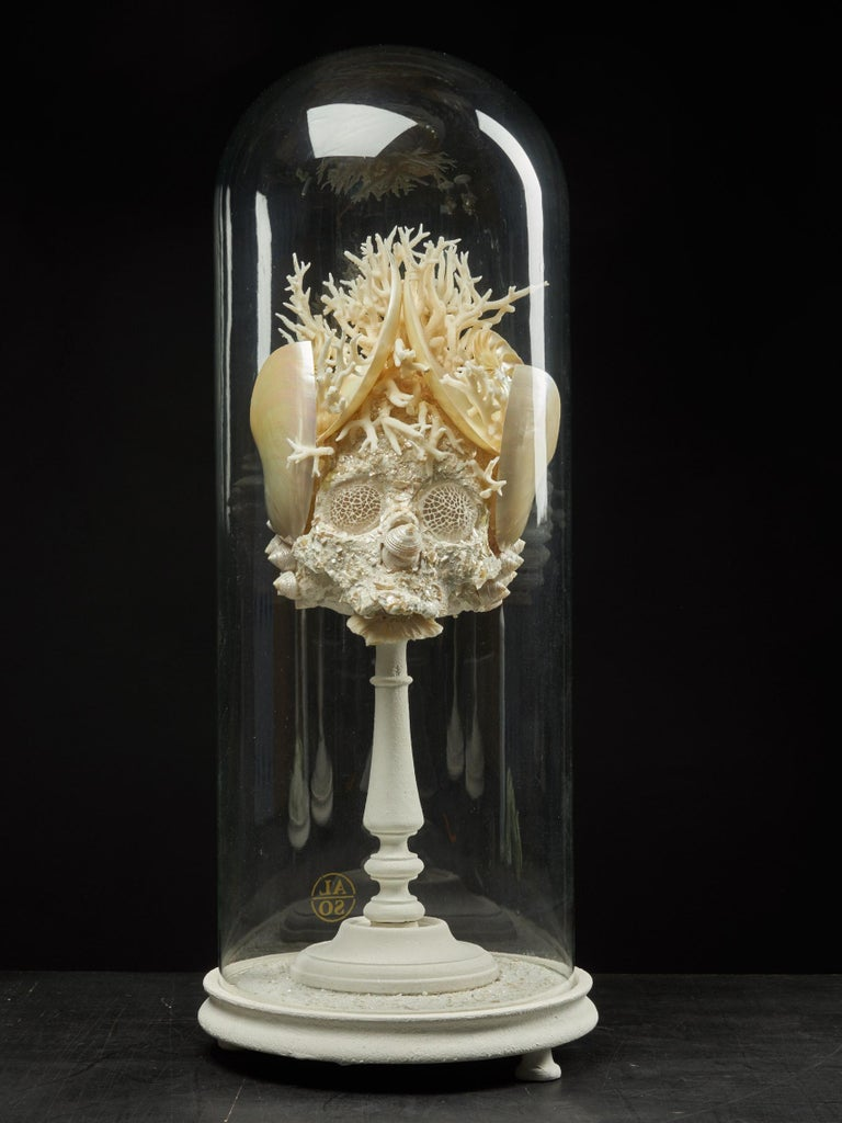 A wonderful composition made out of a variety of white shells and corals. The base of the sculpture is of coral white with the eyes resembling a spider web. The nose is an accumulation of three beige and white pyramid looking shells. Both sides have