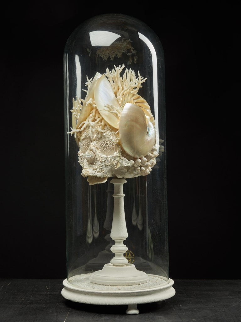 Belgian Shell Sculpture of Fantastic Head on Museum Stand For Sale