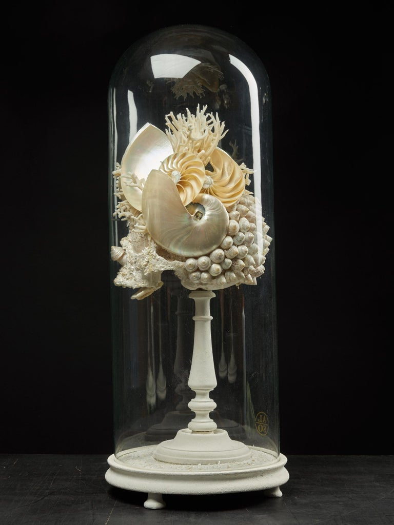 Shell Sculpture of Fantastic Head on Museum Stand In Good Condition For Sale In Leuven , BE