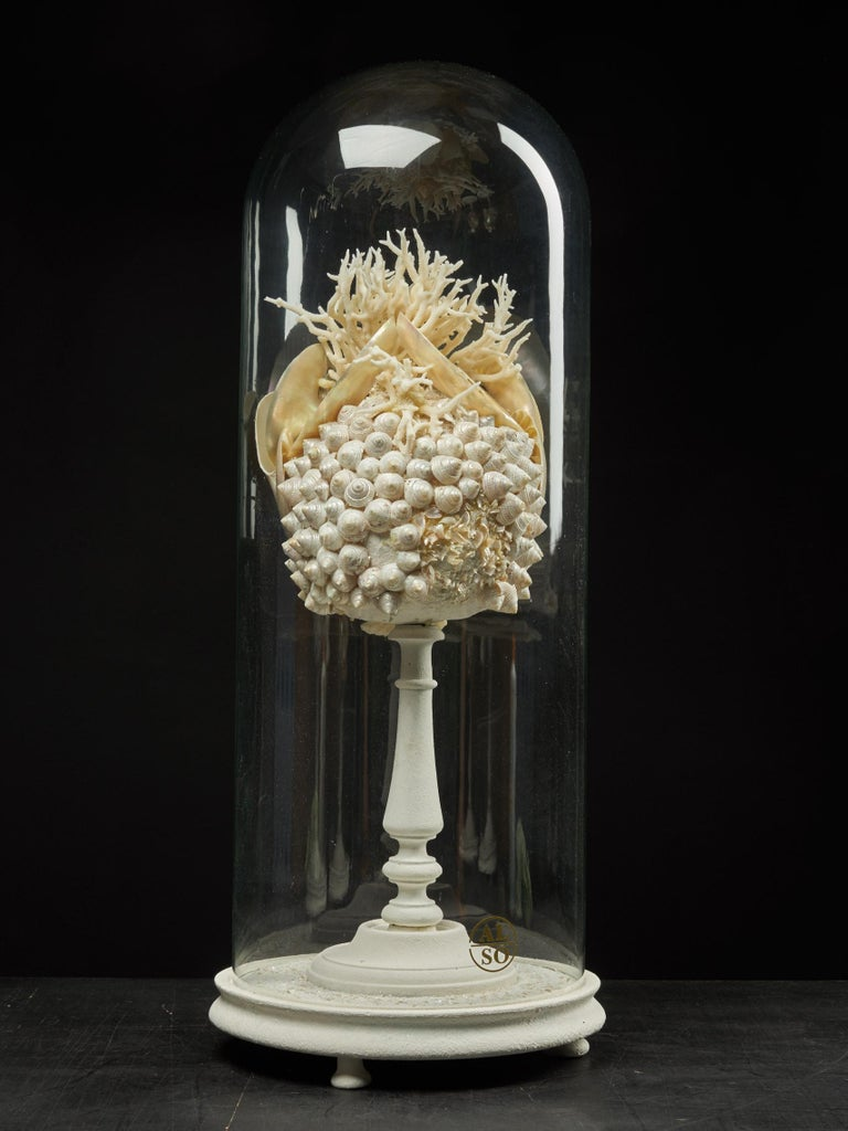 Organic Material Shell Sculpture of Fantastic Head on Museum Stand For Sale