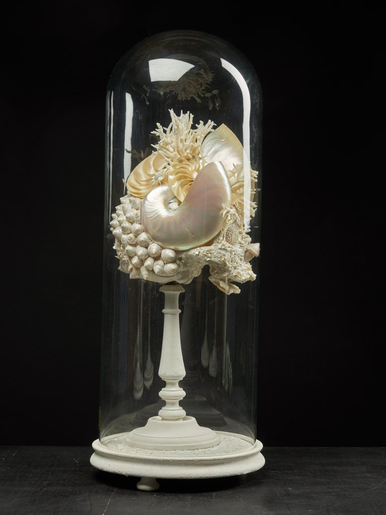 Shell Sculpture of Fantastic Head on Museum Stand For Sale 2