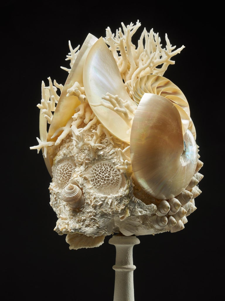 Shell Sculpture of Fantastic Head on Museum Stand For Sale 3