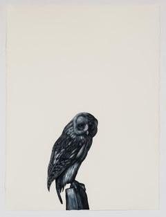 Tawny Owl (after Berjer and Van Kouwenbergh)