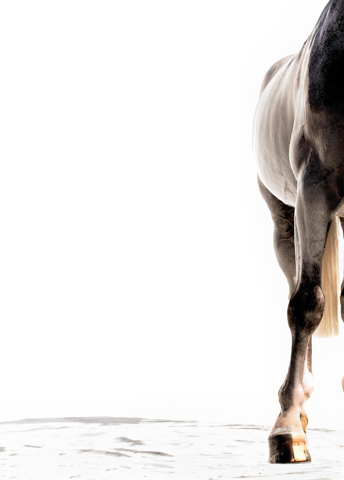 Koredo, Equine Fine Art Photography, Print Only, Signed