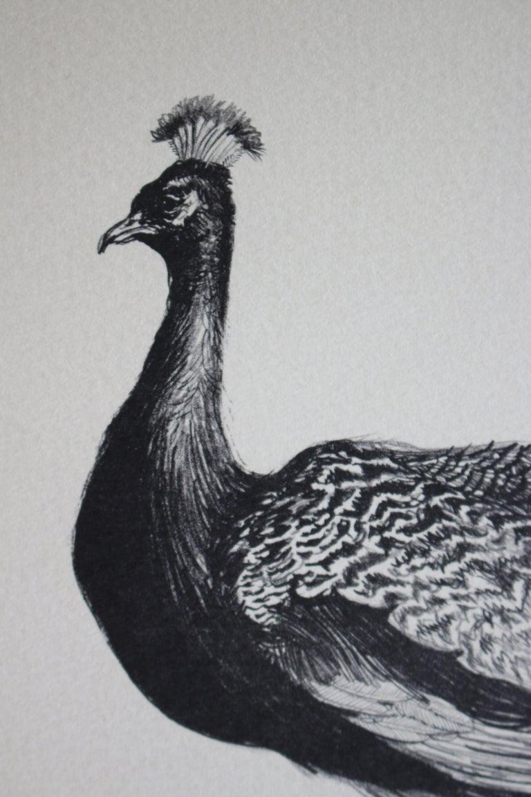 Beautiful Bird (Artist Proof) - Print by Shelly Fink