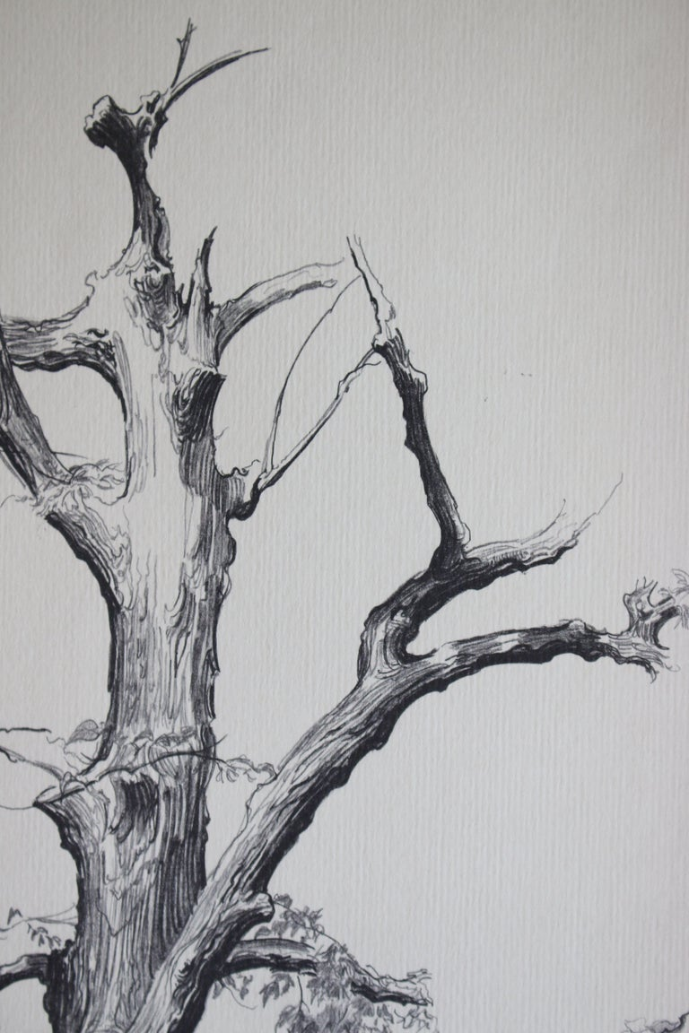 Dying Elm, Vermont (Artist Proof) - Print by Shelly Fink