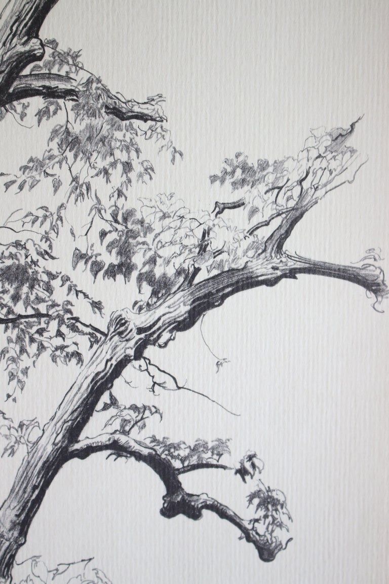 Dying Elm, Vermont (Artist Proof) - Abstract Print by Shelly Fink