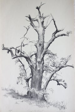 Dying Elm, Vermont (Artist Proof)