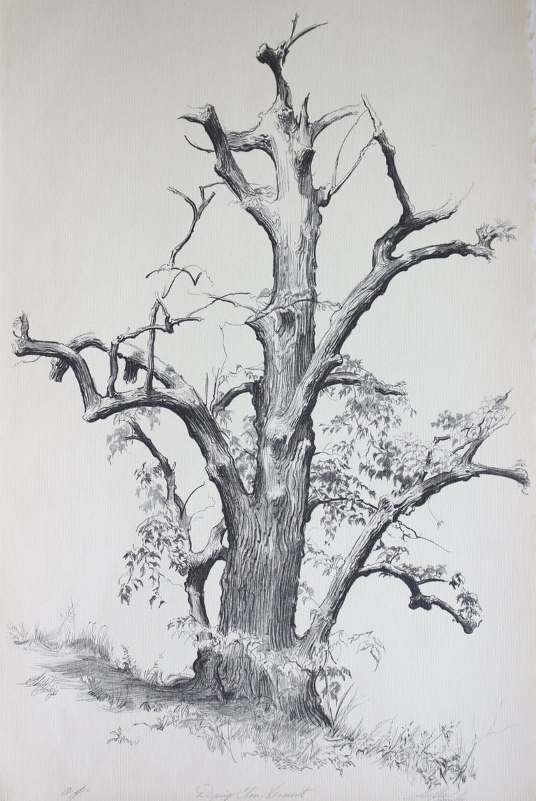 Shelly Fink Abstract Print - Dying Elm, Vermont (Artist Proof)