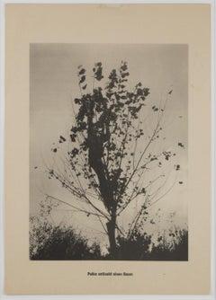 """Das Entblättern eines Baumes / From the portfolio """".....Höhere Wesen befehlen"""""""
