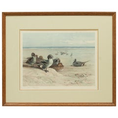 Signed Wildfowl Print, Pintails on the Foreshore by Archibald Thorburn