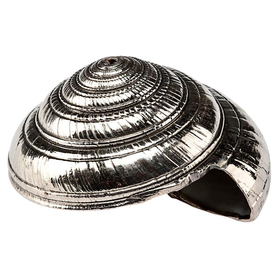 Silvered Sea Shell Architectonica
