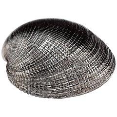Silvered Sea Shell Chamelea