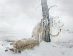 Untitled #159  – Simen Johan, Photography, Animals, Colour, Nature, Snow, Ice