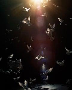 Untitled #187  – Simen Johan, Photography, Birds, Colour, Divine, Light, Art