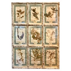 Single Large Framed Display of Nine Florentine Dried Botanicals, circa 1905