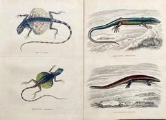 Lizard Antique Hand Coloured Print - Tropical Exotic Lizards Rare Reptiles