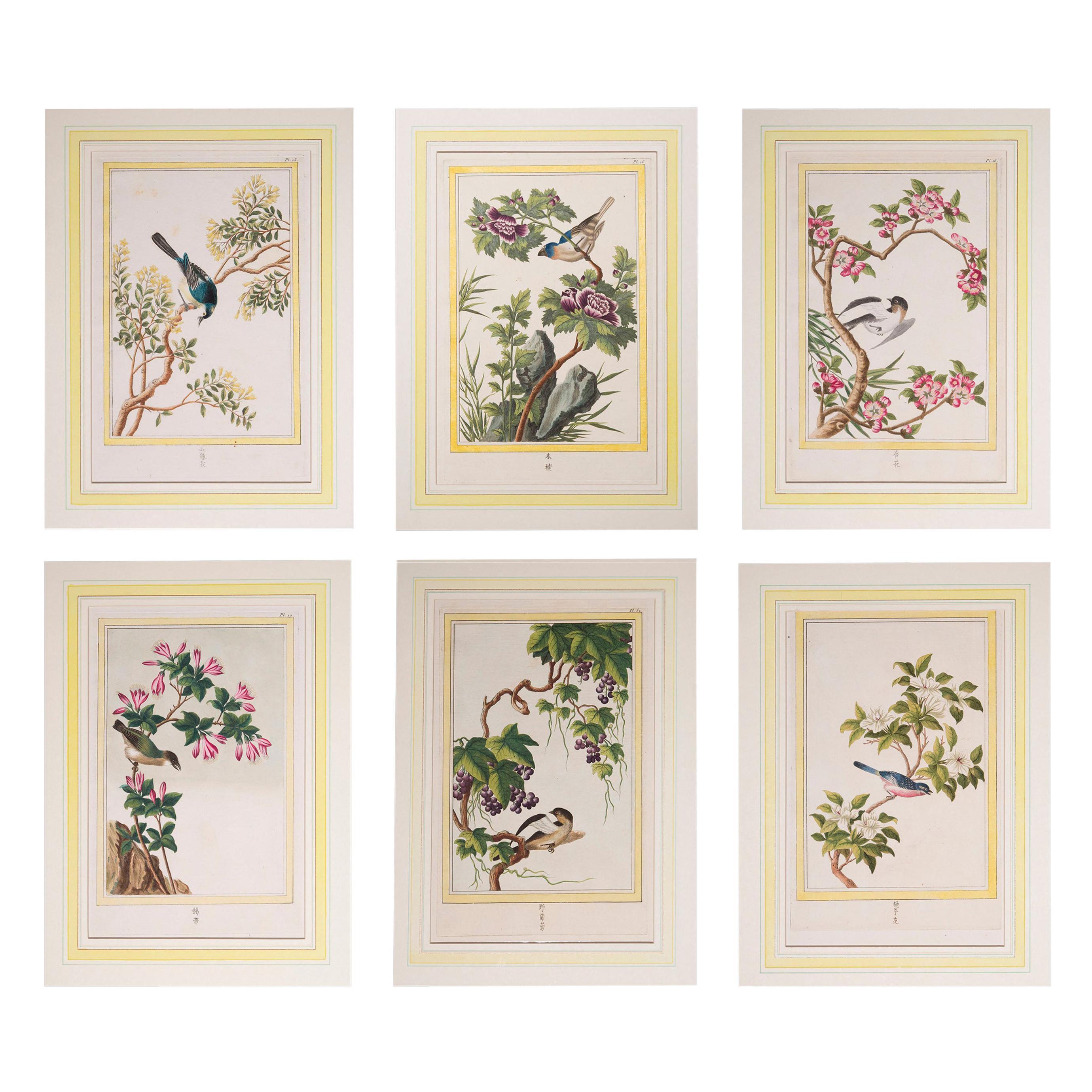 Six Antique 18th Century Botanical Prints Engravings, by P.J. Buchoz, 1776